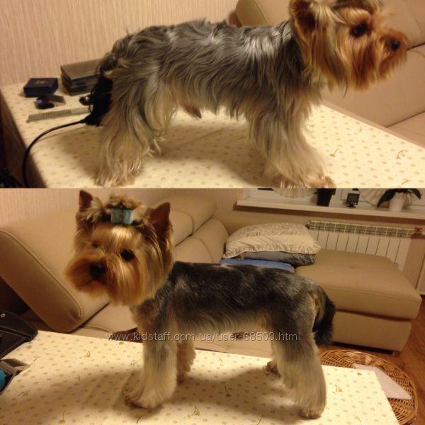 Стрижка собак  Киев, опыт 7 лет с выездом на дом