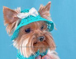 платья и шляпки для собачек мелких пород