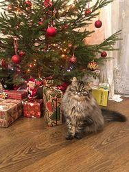 Ангельский котенок