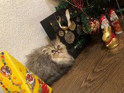 Чей подарок под нашей елкой