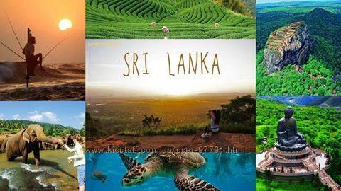 Лучшие отели Шри Ланки по самым привлекательным ценам