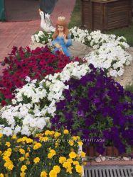 Растения, кустарники, хризантемы деревья для вашего сада