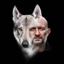 Волк для фото и видео съемки.