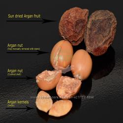 Орех арган.дерева
