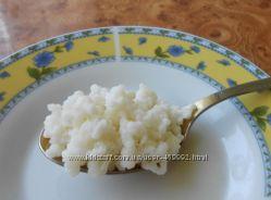 Тибетский молочный гриб, кефирный гриб