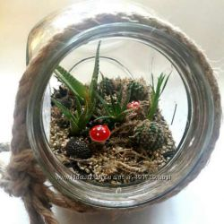 Флорариум, мини сад, подарок, цветы