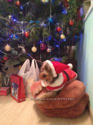 Костюм Санта Клауса на собачку
