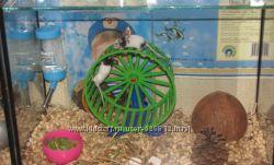 Японские карликовые мышки ищут хозяина