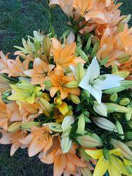 Лилии, лілія  красивенные, свежие, только срезанные