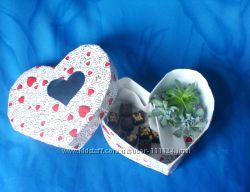 Sweet box - солодощі і живі сукуленти