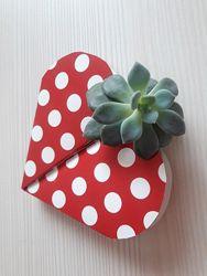 Декор з рослиною - ідея подарунку