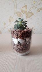 Крутий декор з рослиною - флораріум міні