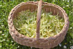 Липовый цвет , цветы жасмина и чайной розы  для полезного и душистого чая.
