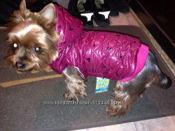 Одежда для собак и котов Новое