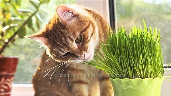 Травосмесь для выращивания домашним животным