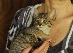 Маленький полосатый тигрик Твикс в поисках друга и любящего хозяина