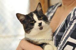 Хотите идеального кота  знакомьтесь  его сиятельство Маркиз