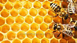 Натуральний мед. Разнотравье Полтавского края. Пыльца и прополис.