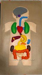 Анатомия человека с фетра ручной работы