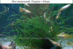 Мох та папороть для акваріума