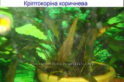 Живі акваріумні рослини