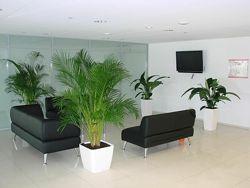 Уход за комнатными цветами в офисах, зимних садах