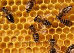 Пчёлы, продукты пчеловодства