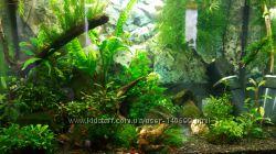 Красивые аквариумные мхи