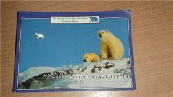 Cеребрянный значок члена Королевского клуба полярного медведя