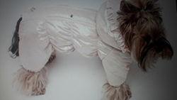 Комбинезон для собачки девочки S2, XS