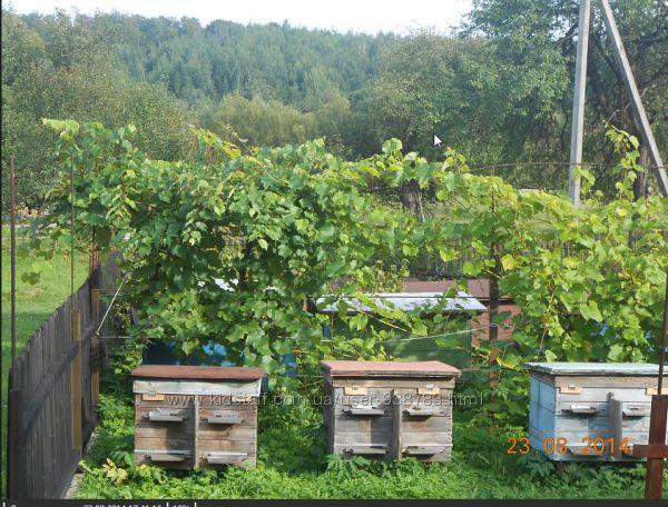 Натуральна косметика на основі продуктів бджільництва
