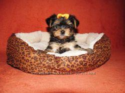 Мягкий лежак для собак мини пород