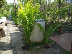 #7: продаваемые растения