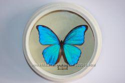 Бабочка Морфо. Перу. 140 мм Коллекционная