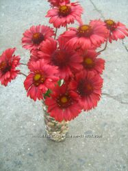 Цветы садовые многолетние . Часть 3- Весна