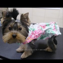 Нарядные платья для маленьких собачек, размер xs, xs2.