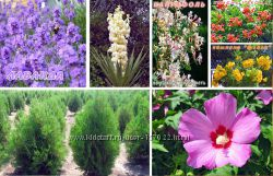 Саженцы плодовых и декоративных культур от 30 руб