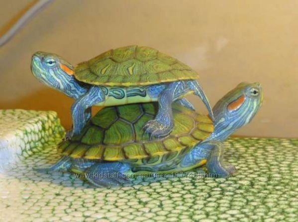 Яркие, разноцветные маленькие черепашкиСамец и самка. Доставка  корм