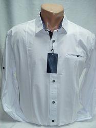 Рубашка мужская Noseda белая с cиней отделкой S, L-50, XL, 2XL54