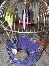 Клетка для попугая с аксессуарами, состояние отличное