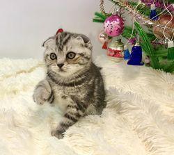 Продам мраморных котят