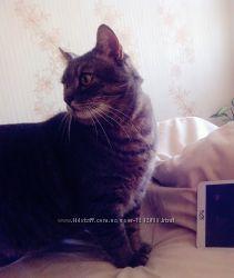Передержка котов, кошек