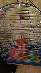 Клетка для большого папугая и клетка для маленького папугая