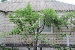 Продам или обменяю дом в Голой Пристани на Херсон
