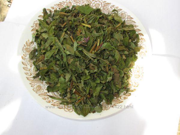 Иван чай рубленый стебель и лист, крупный, растение, кипрей, epilobium angu