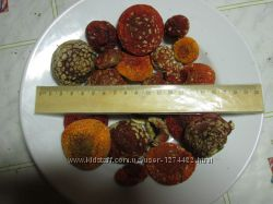Мухомор красный  Amanita muscaria.