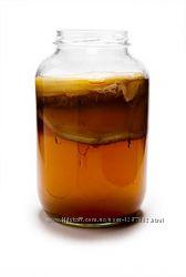 Чайний гриб лікувальний