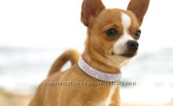 Ошейник горный хрусталь для небольших средних собак кошек Чихуахуа Мопс
