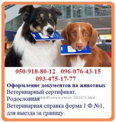 Оформление ветеринарных документов на животных - быстрое оформление справка