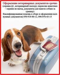 Оформление ветеринарных и разрешительных документов для вашего любимца